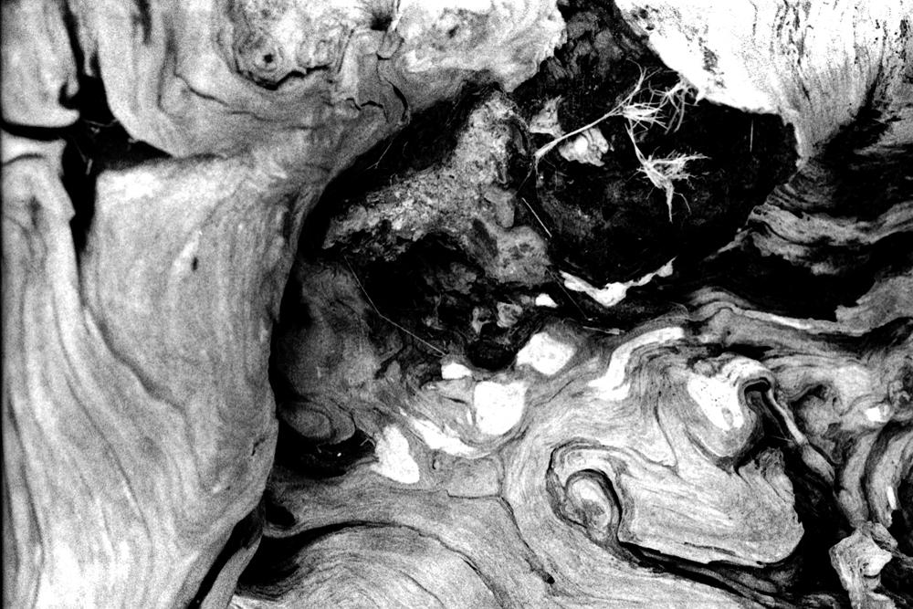 Driftwood1-CU