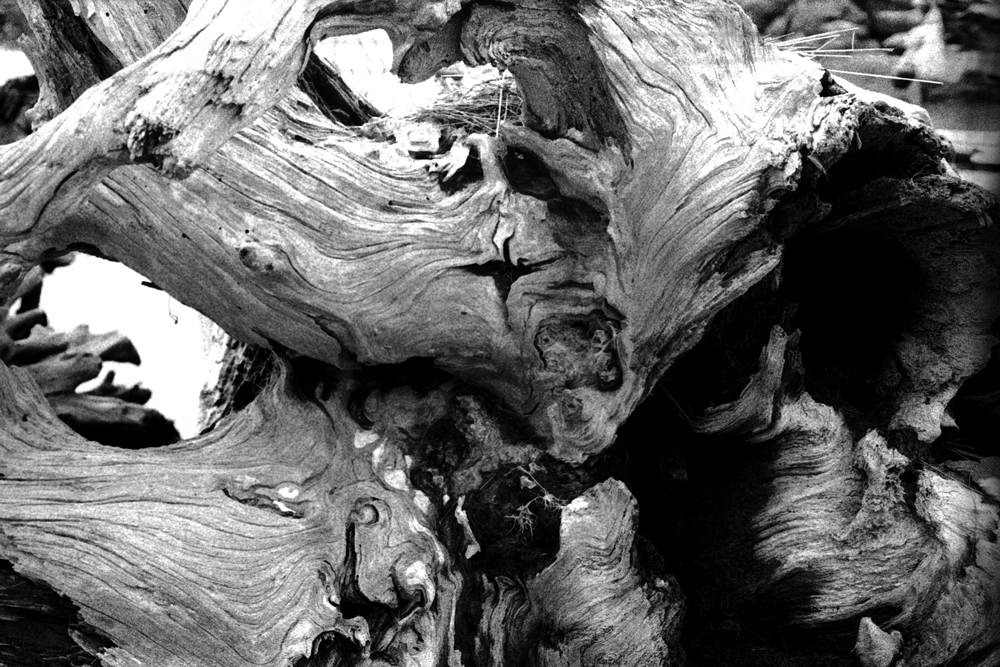 Driftwood3-CU