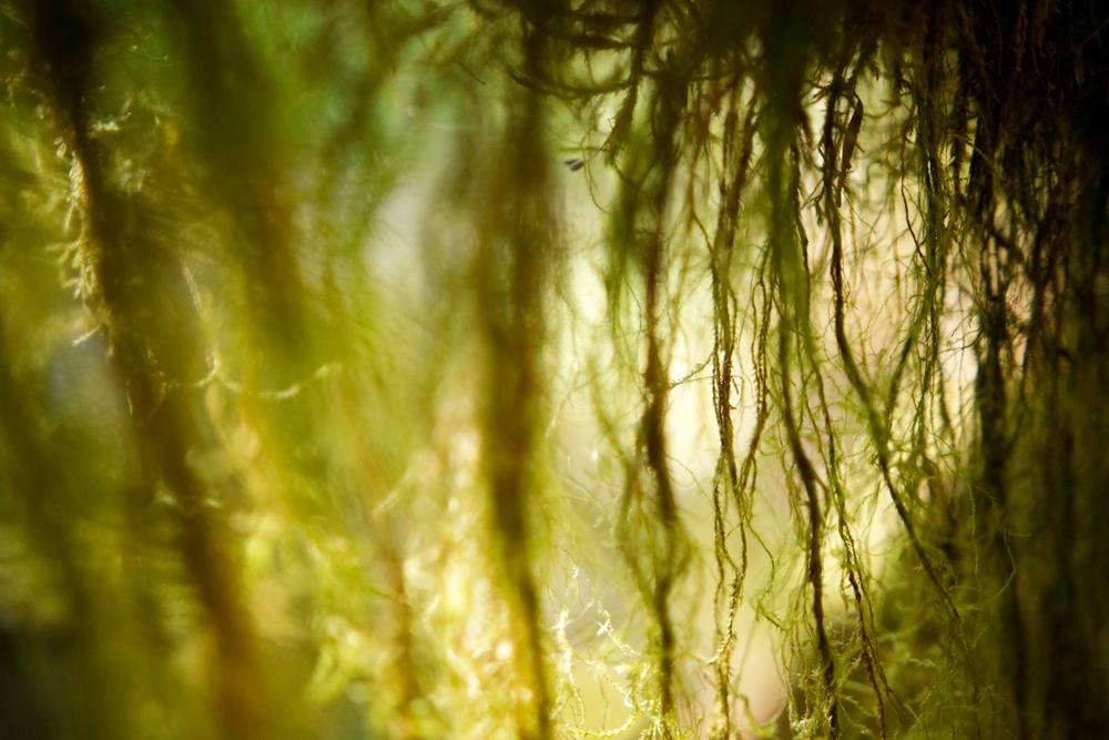 Mossy1-2x3